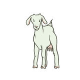 Vector sketch coloured isolated illustration farm animal. Young white goat with udders and no horns. The production of Royalty Free Stock Image