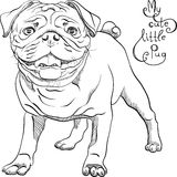 Vector sketch cute dog black pug breed Royalty Free Stock Images