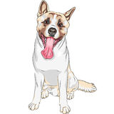 Vector sketch dog Akita breed smiles Royalty Free Stock Image