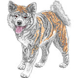 Vector sketch dog Akita Inu Japanese breed smiles Stock Image