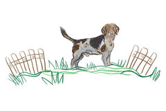 Vector sketch dog Beagle breed Stock Images