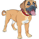 Vector sketch dog Boerboel breed Royalty Free Stock Photos