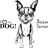 Vector sketch dog Boston Terrier breed smiling stock images