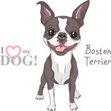 Vector sketch dog Boston Terrier breed smiling royalty free stock images