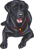 Vector sketch dog breed Labrador Retriever Stock Images