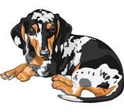 Vector Sketch dog Dachshund breed lying. Black and tan double dapple smooth-haired miniature dog Dachshund breed (German badger-dog; hot dog, wiener dog or Stock Photos
