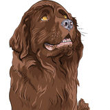 Vector Sketch dog Newfoundland hound breed sitting Royalty Free Stock Photos