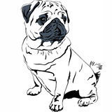 Vector sketch dog Pug breed hand drawing vector Stock Image