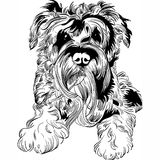 Vector sketch dog Schnauzer breed hand drawing vector. Sweet dog Miniature Schnauzer breed hand drawing vector Stock Photos