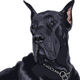 Vector sketch domestic dog black Great Dane breed. Sketch of close up portrait black dog Great Dane breed Stock Photography
