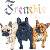 Vector sketch domestic dog French Bulldog breed Stock Images