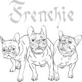 Vector sketch domestic dog French Bulldog breed Stock Image