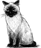 A hand drawing of a sitting siamese kitten vector illustration