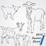 Vector sketch drawing of goats, Chinese 2015 new. Vector sketch drawing of goats and sheep, Chinese 2015 New Year symbol Stock Images