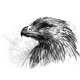 Vector sketch of eagle Royalty Free Stock Photo