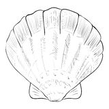 Vector sketch of fan shell. Hand draw illustration Stock Photography