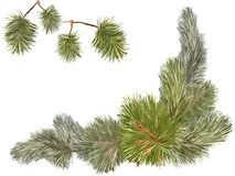 Pine tree branches. Vector sketch of fir branches and pine drawn for New Year holiday Royalty Free Stock Photography
