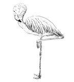 Vector sketch of a flamingo Royalty Free Stock Images