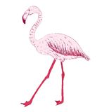 Vector sketch of a flamingo Royalty Free Stock Image