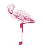 Vector sketch of a flamingo Stock Photography