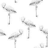 Vector sketch of a flamingo Stock Images