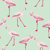 Vector sketch of a flamingo Stock Image
