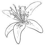 Vector sketch of flower Royalty Free Stock Photo