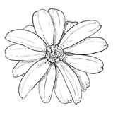 Vector sketch of flower Stock Image