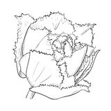 Vector sketch of flower Stock Photography