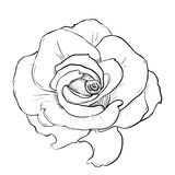 Vector sketch of flower Royalty Free Stock Images