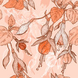 Vector Sketch of fuchsia flowers Stock Images