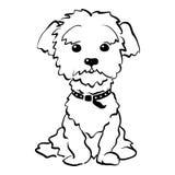 Vector sketch funny maltese dog sitting Stock Image