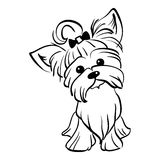 Vector sketch funny Yorkshire terrier dog sitting. Sketch Funny dog Yorkshire terrier breed sitting hand drawing vector Stock Image