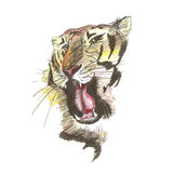Vector sketch of gnarling tiger Royalty Free Stock Images