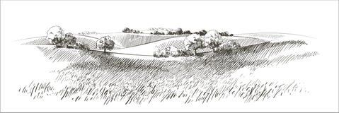 Free Vector Sketch Green Grass Field On Small Hills. Meadow, Alkali, Lye, Grassland, Pommel, Lea, Pasturage, Farm. Rural Stock Image - 180376651