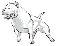Vector sketch hand drawing pitbull barking Royalty Free Stock Photography