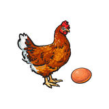 Vector sketch hand drawn chicken, egg isolated. Vector cartoon hand drawn sketch chicken hen and egg. Isolated illustration on a white background. Farm poultry Stock Images