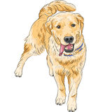 Vector sketch happy dog breed Labrador Retriever s. Happy Labrador Retriever run to meet the owner, smiling and waving his tail Royalty Free Stock Photography