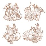 Vector Sketch Harvest Of Tropical Exotic Fruits Royalty Free Stock Images