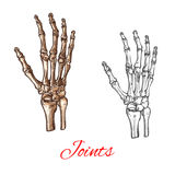 Vector sketch icon of human hand bones or joints Stock Images