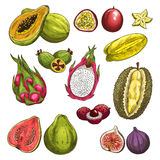 Vector sketch icons of exotic tropical fruits Royalty Free Stock Images