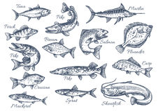 Vector sketch icons of fish of river or sea vector illustration