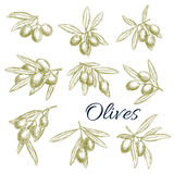 Vector sketch icons of fresh green olives branches Stock Photo