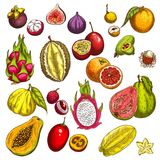Vector Sketch Icons Of Tropical Exotic Fruits Royalty Free Stock Photo