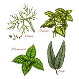 Vector sketch icons of spice and herb dressings Stock Photography