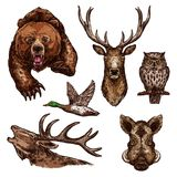 Vector sketch icons of wild animals birds Stock Image