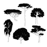 Vector sketch illustration of black silhouettes of different trees on a white background. Pine, birch, oak, acacia and Stock Image
