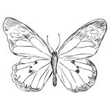 Vector sketch illustration - butterfly Stock Photo