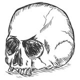 Vector sketch illustration - old stale skull Stock Photography