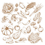 Vector Sketch Isolated Vegetables Icons